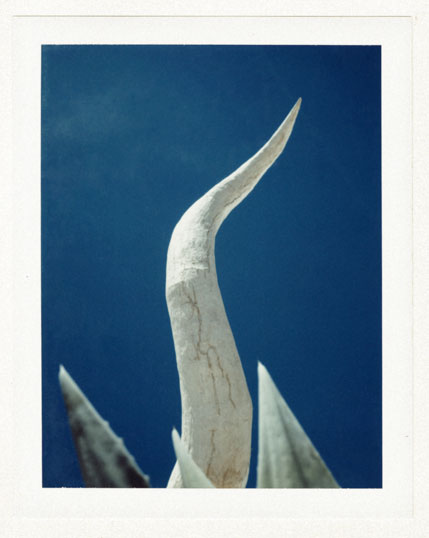 Bullhorn_sculpture_polaroid_
